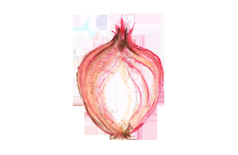 08_cipolla